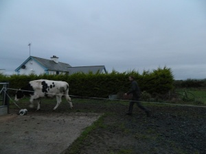 I don't get too attached to Jimmy's cows...