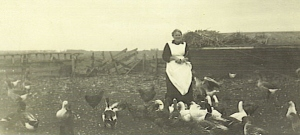 Annie and her geese